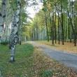 Вторая исследовательская экспедиция пройдет в парке «Швейцария»