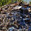 Сортировать мусор намерены только во время ЧМ-2018 - лого